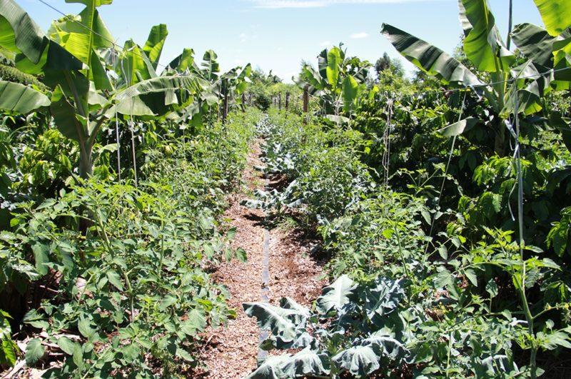 Agricultura Sintrópica (Foto: http://www.cienciarte.com.br/noticia-1463390040-jovens-se-unem-para-ensinar-conceito-de-agroflorestas-a-produtores-rurais)