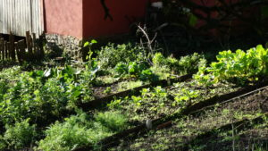 Hortas Domésticas