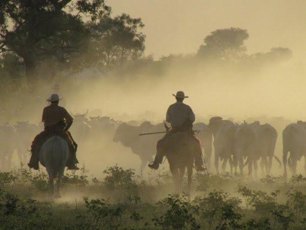 Sinueiro ( foto fontehttp://sites.beefpoint.com.br/temporeal/2013/02/01/beleza-de-foto-de-pecuaria-no-pantanal-por-sjccosta/)