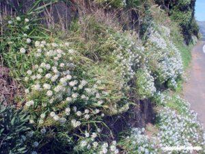 Álisso (foto http://www.terrain.net.nz/)